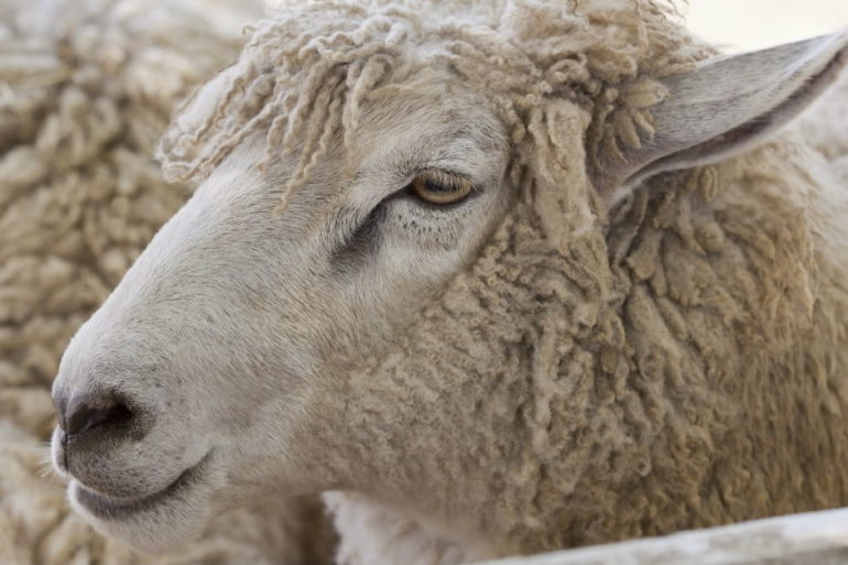 """5 Ways to Recognize """"A Wolf in Sheep's Clothing"""""""